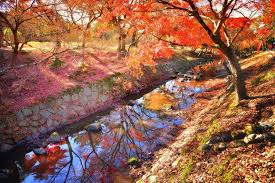The Best Spots to See Autumn Leaves in Kansai - GaijinPot Travel