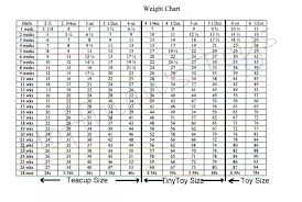 standard poodle sizes chart hoffmans standard toy poodles akc puppies poodles for sale in tx