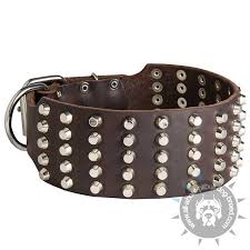 leather pitbull collar extra wide and studded