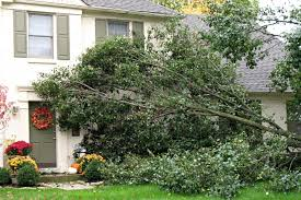 Do You Have a Dangerous Tree? | HouseLogic Tree Maintenance Tips