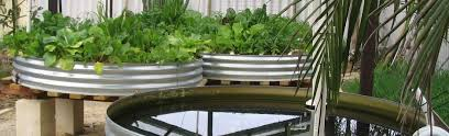 Tour Our Aquaponics System Backyard North East Images On Charming Backyard Aquaponics Forum