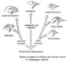 charles darwin theory of evolution essay related post of charles darwin theory of evolution essay