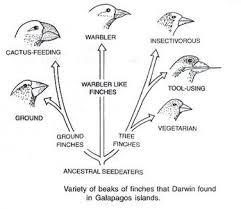 charles darwin theory of evolution essay related post of charles darwin theory of evolution essay