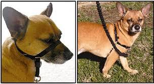 Leash Training: How to <b>Walk</b> a Dog That Pulls