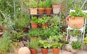 apartment herb garden. Verticle Urban Herb Garden Apartment Balcony Web