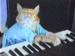 Keyboard Cat will play the Puppy Bowl ...