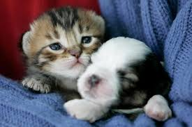 cute kittens and puppies cuddling.  Cute On Cute Kittens And Puppies Cuddling P