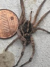 Common Spiders Of The Pacific Northwest Eastside Exterminators