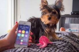 Did You Feed The Dog Chart Dogsync Is An App To Help Your Family Keep Track Of Feeding