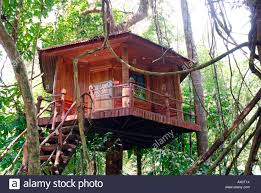 Treehouse Khao Sok National Park Thailand Southeast Asia Asia Treehouse In Thailand