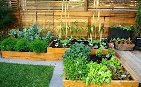 garden in a bag. Raised Garden Bed Planting Ideas 8 Tags Contemporary Landscape Yard With Basil In A Bag