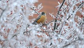 Image result for Winter birds in boise idaho feeders