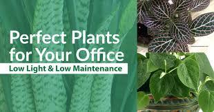 low maintenance office plants. Best Low Light Office Plants Perfect For Your And Maintenance