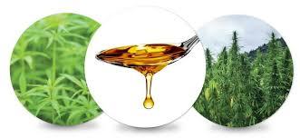 Hasil gambar untuk hemp oil tinctures