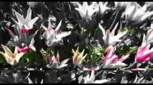 Morton Feldman Palais de Mari (Aki Takahashi) - YouTube