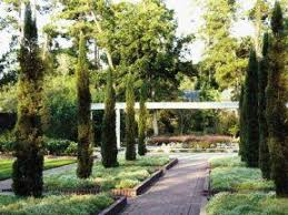 the renaissance garden at mercer botanic gardens will soon feature six silver date palms near the