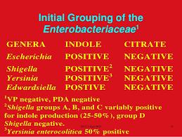 Biochemical Tests In Enterobacteriaceae