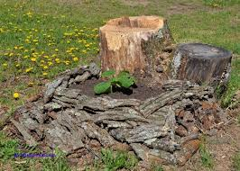 13 best tree stump solutions images on diy stump removal