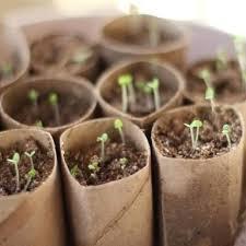 How To Germinate Flower Seeds Paper Towel How To Germinate Flower Seeds Paper Towel Under Fontanacountryinn Com