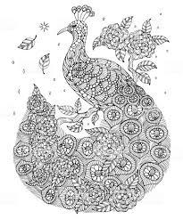 Indiase Pauw Kleurplaat Stockvectorkunst En Meer Beelden Van Bloem