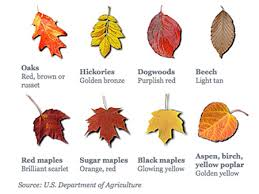 Identification Chart For Leaves Various Fall Colors Leaves The Duluth Experience Tour Company