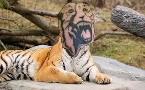 тигр курильщика