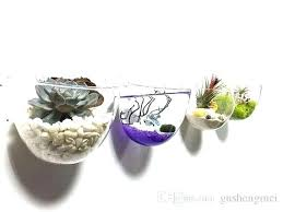 plants in glass bowl pack large opening bowl glass wall vase wall mounted succulent planters air