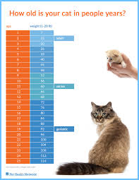 Kitten Weight Chart By Age How Old Is Your Cat In People Years