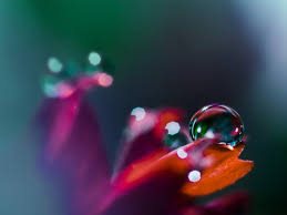 macro photography close up photos of water drops on flower 1600 1200 wallpaper 5