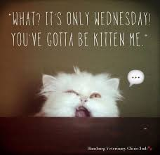 Wednesday Quotes Mesmerizing Happy Wednesday Quotes Funny Its Wednesday Sayings