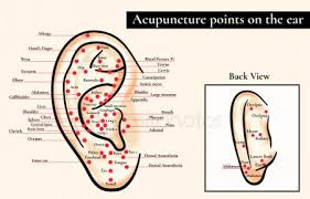 Ear Acupuncture Chart Free Acupuncture Points Stock Images Royalty Free Acupuncture