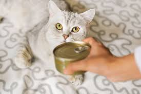Image result for cat food