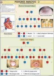 Tongue Analysis Chart Pedigree Analysis 2 For Genetics Evolution Chart