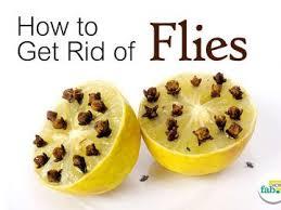 25 mel s ideias de get rid of flies somente no pinterest