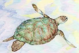 Small Picture Drawn sea turtle graphite pencil Pencil and in color drawn sea