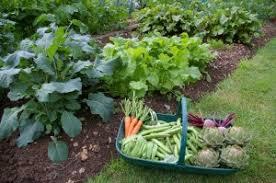 florida vegetable gardening. Vegetable Garden Florida Gardening U