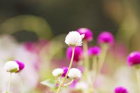 Image result for 가을에 피는 꽃