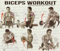 Protein Drinks Help Build Stronger Muscles Gym Workouts