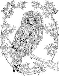 It's also a very good and original gift idea ! Owl Coloring Pages For Adults Free Detailed Owl Coloring Pages