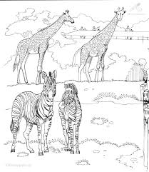 1001 Kleurplaten Dieren Paarden Kleurplaat Zebra