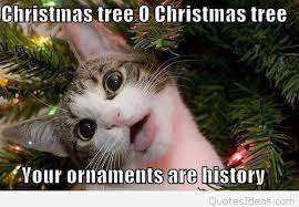 Funny Christmas Tree Quote With A Cat Image Magnificent Christmas Tree Quotes