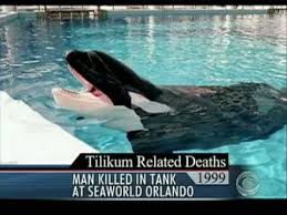 killer whale attacks on humans. Simple Whale Deadly Attack At Sea World On Killer Whale Attacks Humans R