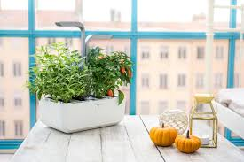 the véritable indoor garden lets you grow herbs and vegetables right in your own kitchen