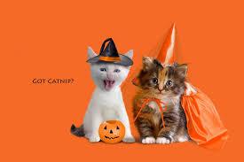 Cute Halloween Cat Wallpaper