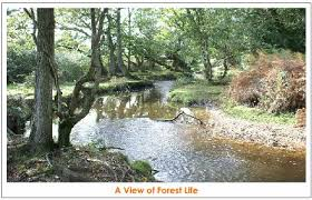 forests and wild life management of natural resources  image