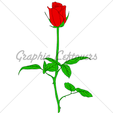 Small Picture One Red Rose In Hand Drawn Style GL Stock Images