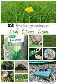 these 12 lawn care tips will make sure that your lawn is lush and green all