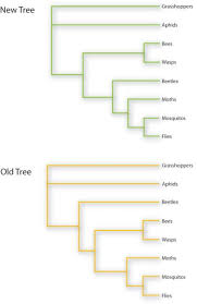 Genetic Family Tree New Genetic Analysis Forces Re Draw Of Insect Family Tree