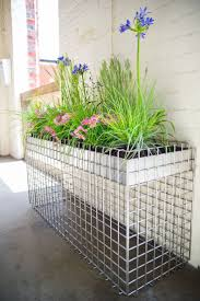 The grasses, and tall blue agapanthus russell nicely against the metal grid  contemporary pot