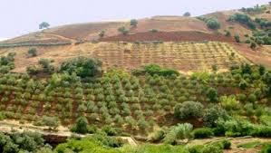 """Résultat de recherche d'images pour """"Tlemcen : Les zones montagneuses"""""""
